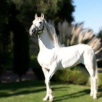 White Horse represents Victory but the rider is not Christ!